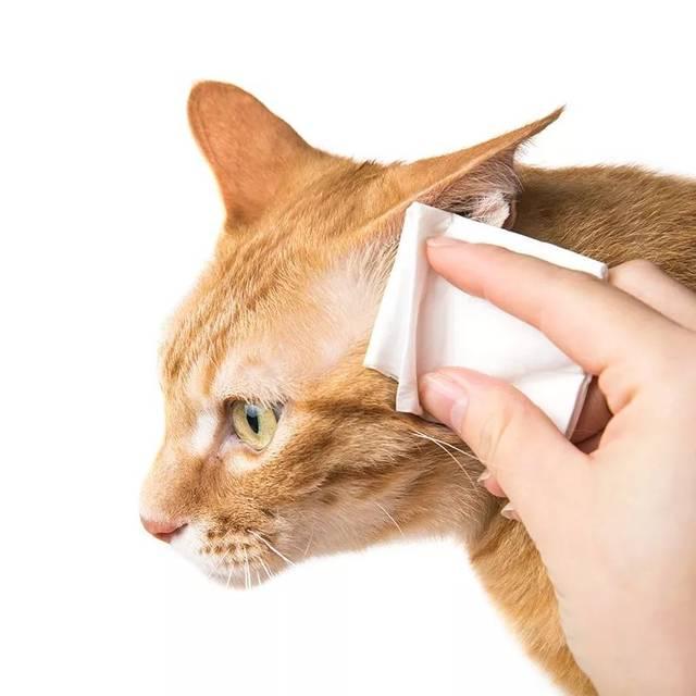 猫咪一直挠耳朵怎么办!
