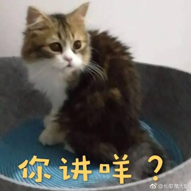我们一起学猫叫,一起喵喵喵喵喵~ 不是aj辣种_(:з」∠)
