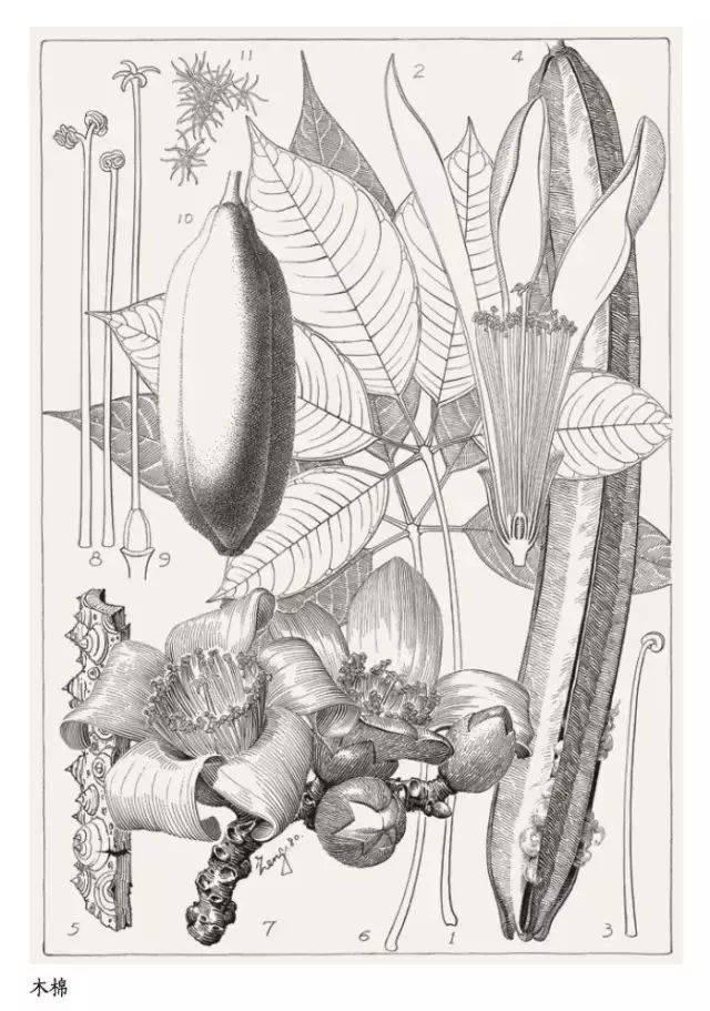 钢笔手绘 植物组合