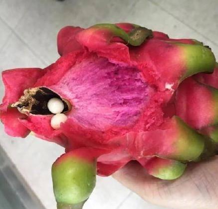 火龙果的造型可谓世界上最酷的水果之一,味道像猕猴桃,梨,西瓜的乱伦图片