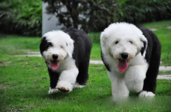 宠物狗大全图片种类 适合当宠物的狗品种图片大全图片