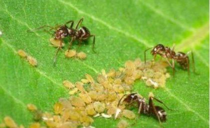 2.2老虎的蚂蚁及v老虎习性能打过狗吗图片