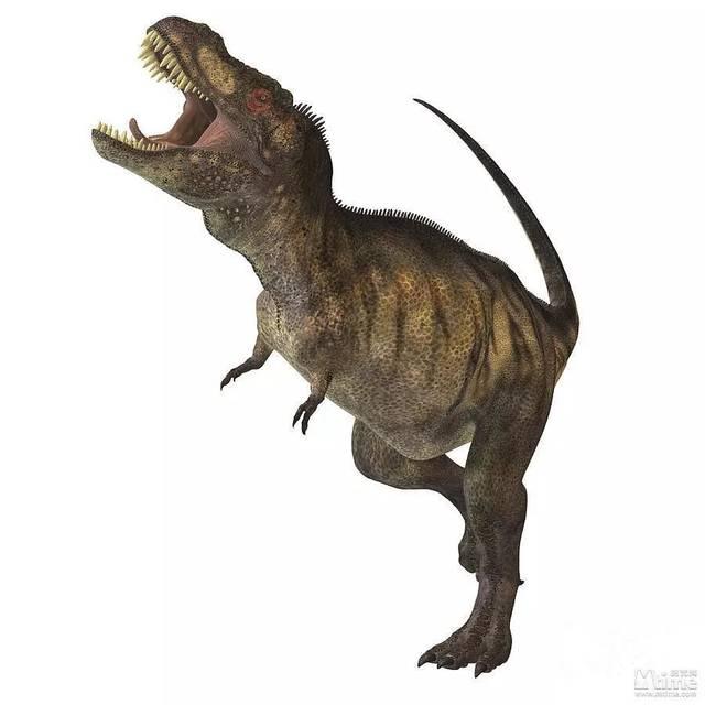 5米 战斗指数:9 霸王龙,又名雷克斯暴龙,白垩纪时期的恐龙杀手,体型