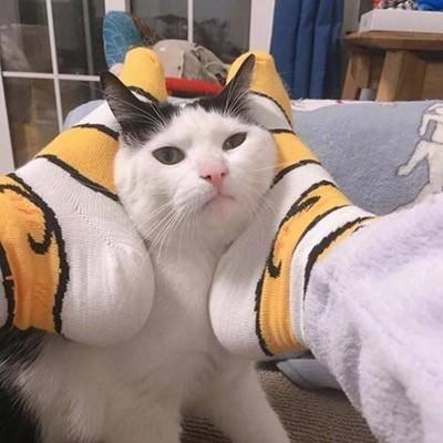 3组最近非常火的猫咪情侣头像