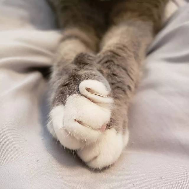 而且,猫咪磨爪子,不仅仅是为了磨掉旧趾甲进行新陈代谢,它们还留下了