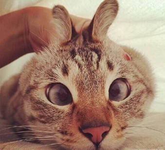 我们一起学猫叫,一起喵喵喵喵