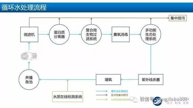 工厂化循环水养殖系统流程简图图片
