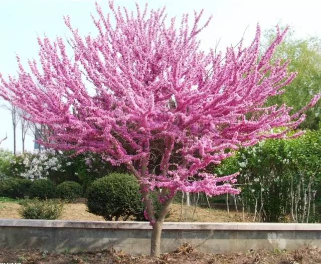 558种 · 园林植物配置大全