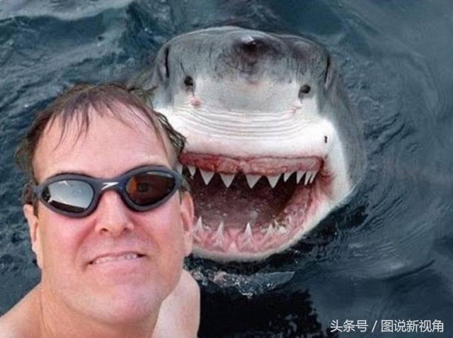 而当事人却蒙在了鼓里,图为自拍时出现了鲨鱼,男子眼睛亮了