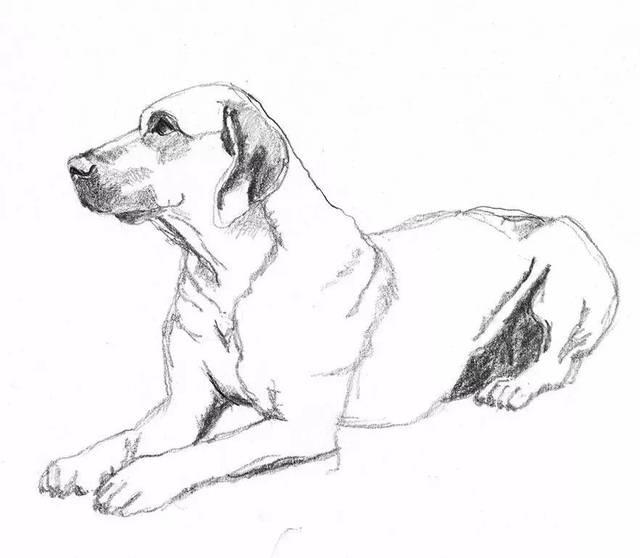 素描画的狗狗,竟然这么可爱~-宠物频道-手机搜狐图片