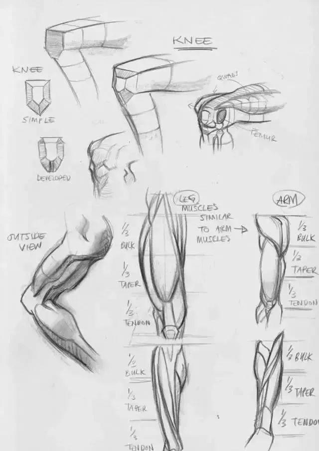 人体的肚子内部结构�_想画好速写,必须先掌握人体动态结构(收藏素材)