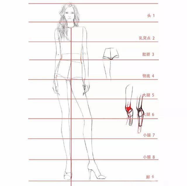 人体比例_完美的人体比例是, 身长为九头或八头半, 肩宽为头宽的两倍半, 脚长