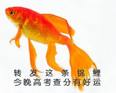 锦鲤图片手绘考试