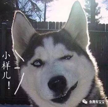 """它是表情包里常见的西伯利亚雪橇犬""""哈士奇""""的祖先.(英语:hasky)图片"""