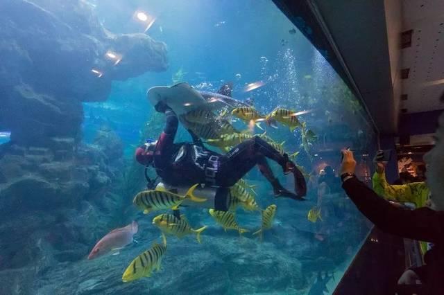青岛海底世界美人鱼_精彩绝伦的青岛海底世界三大表演---升级版\