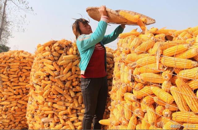 中国农民丰收节,我国一个新节日诞生了