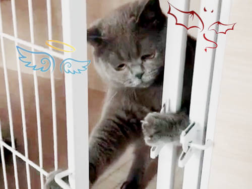 大概是被网友这样看着有点不好意思了,蓝猫就这样低下了头,开始了图片