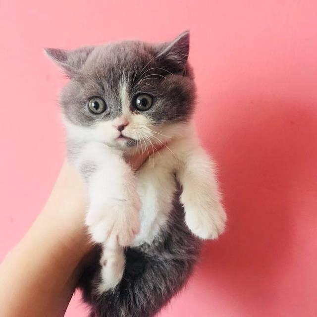欧美大黑吊狠狠撸最新版_美女店主亲自示范,撸猫正确姿势,包你停不下来哈哈