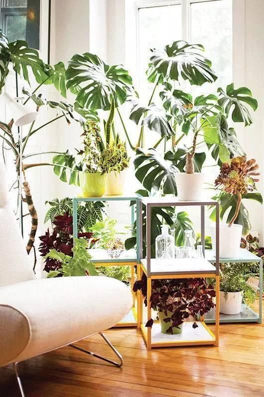 室内窗户绿植设计