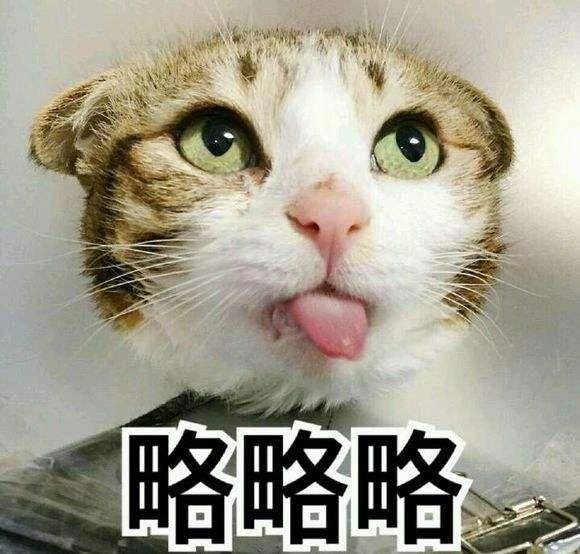 猫咪略略略表情包图片