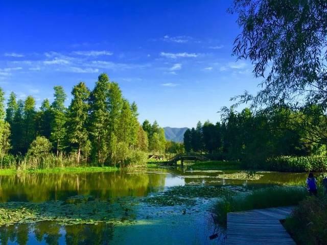 浅谈湿地公园植物配置(干货)