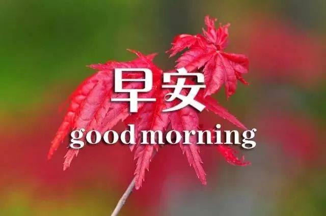 最新好看早安问候图片鲜花带字 新的一天早安语精美语句