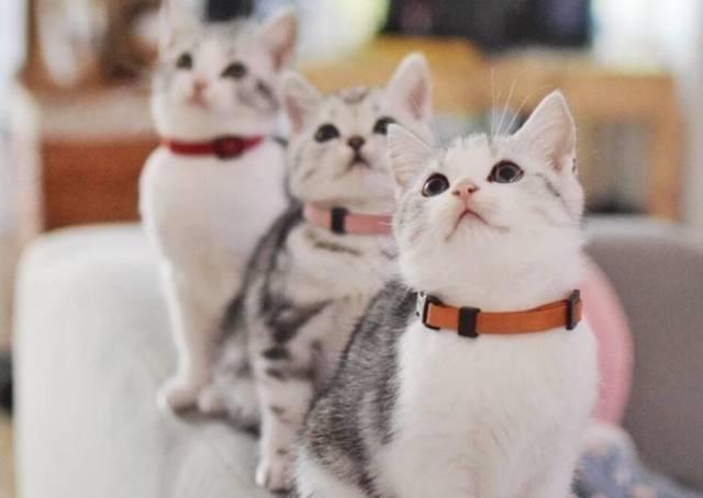 猫咪的6个小秘密,铲屎官们如果不知道这些,都不好意思图片