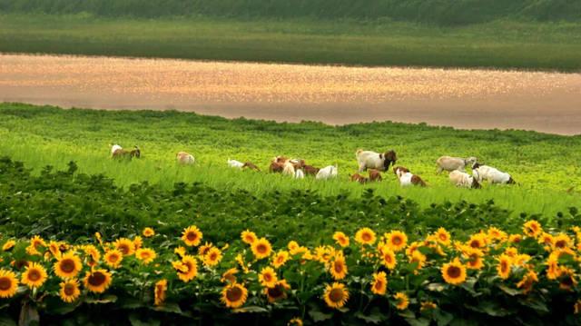 4、土地政策日趋严格、管理强度加大,有限空间内的升值区间变窄。 田园综合体典型特征 1、农民广泛参与受益:农民不仅充分参与田园综合体的建设过程,还能享受田园综合体带来的各种潜在效益。 2、强化融合突出体验:将农业从第一产业向第二三产业延伸,三者相互依存、相互促进,共同助推综合体发展。 3、强调农业创意理念:按照特色化、个性化、艺术化理念,将生产要素融入田园综合体的产品设计和产品服务中。 4、集约配置乡村资源:对当地农村资源禀赋和乡村传统文化等系统梳理,实现资源的有效利用和生产要素最大利用化组合分配。  参