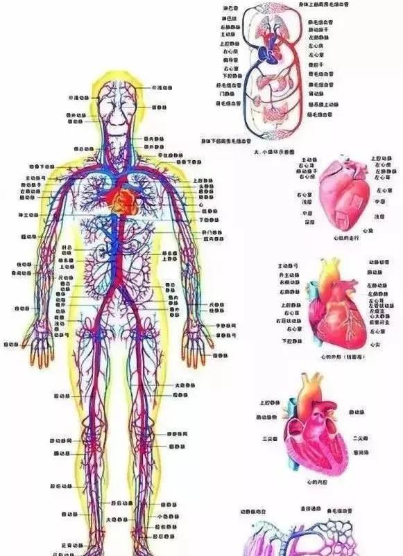 人体系统_人体8大系统发病顺序,千万别越过第5道门槛!