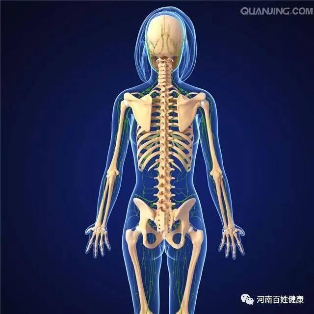 类似于人体艺术的_或者类似于一个交通要道的作用,这是一个正常脊髓,给我们人体带来的