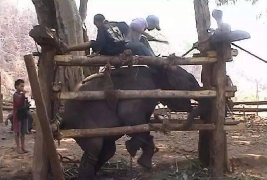 大蟒蛇肚子里的大象