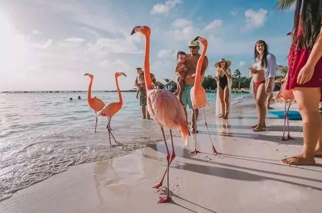 18禁色_这座刷爆ins的马卡龙色的海岛,满岛都系粉红火烈鸟,18禁!仲要免签?