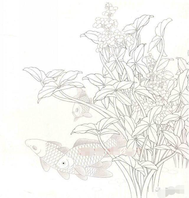 鱼法秘诀:工笔长尾锦鲤画法图解,工笔鱼的画法步骤及欣赏!