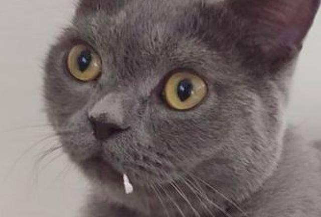 原来小白猫一脸正气,而旁边的灰猫嘴边,还留有着卫生纸的纸屑呢!图片