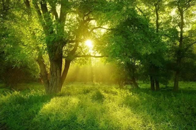 壁纸 风景 森林 桌面 640_426图片