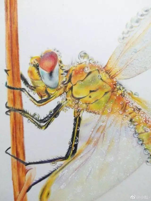 『绘画教程』彩铅画蜻蜓,小动物就是要细抠!