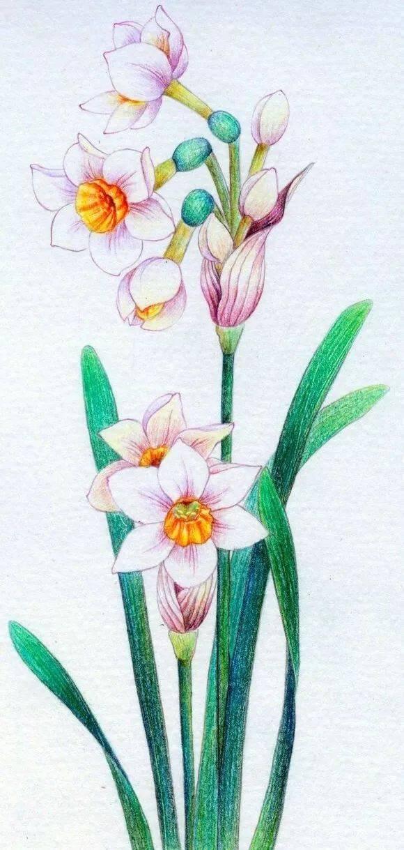 『一树画室暑假课』彩铅花卉图片