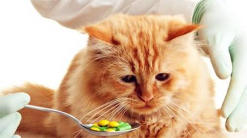猫咪生病不会告诉你,12大警讯不要等严重时才发现