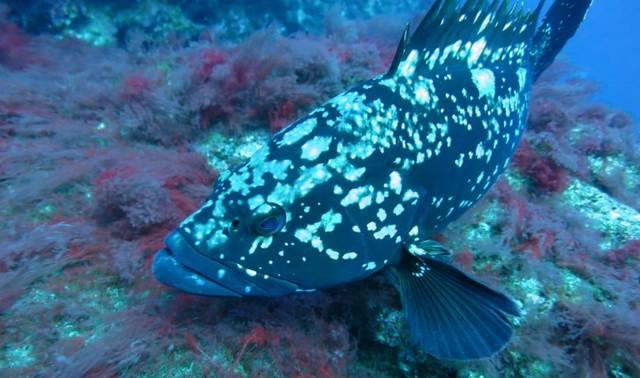 潮阳人注意!这种常吃的鱼竟比河豚毒百倍!收治了13名中毒患者!