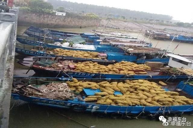 省海洋渔业指挥部,南通市海洋与渔业局等单位专家,对随机抽取的文蛤