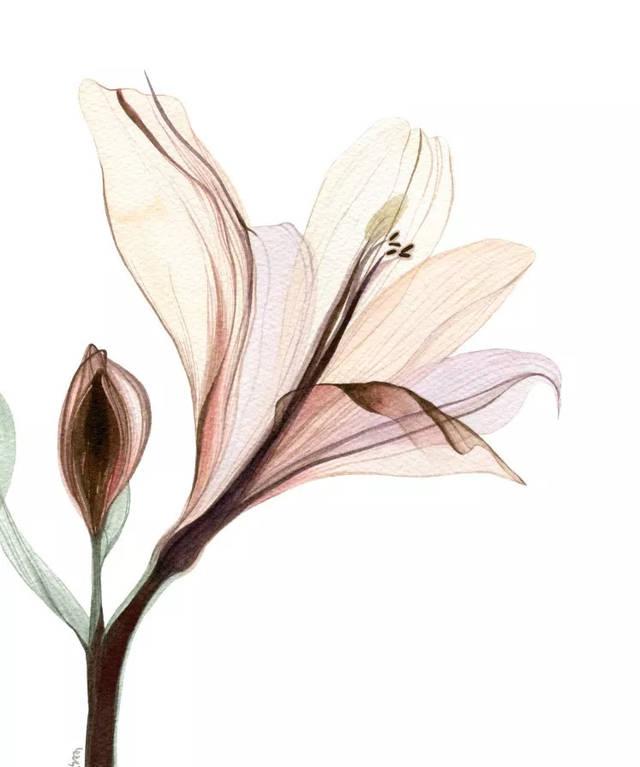 彩铅课堂190|好看又简单的花,画起来吧!