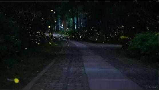 你多久没见萤火虫了?浙里10个超美的观赏地温州也有!仲夏夜一起去寻流萤吧 温州龙鱼论坛 温州龙鱼第3张
