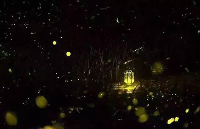 你多久没见萤火虫了?浙里10个超美的观赏地温州也有!仲夏夜一起去寻流萤吧 温州龙鱼论坛 温州龙鱼第7张