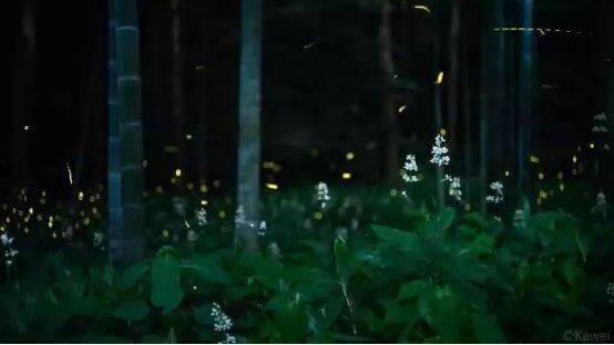 你多久没见萤火虫了?浙里10个超美的观赏地温州也有!仲夏夜一起去寻流萤吧 温州龙鱼论坛 温州龙鱼第4张