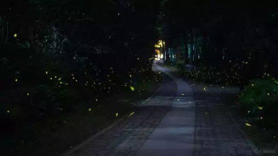 你多久没见萤火虫了?浙里10个超美的观赏地温州也有!仲夏夜一起去寻流萤吧 温州龙鱼论坛 温州龙鱼第5张