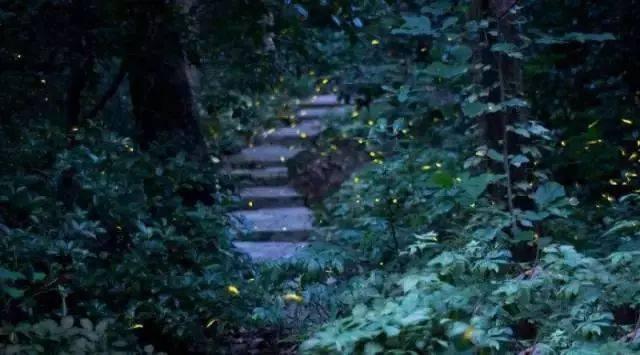 你多久没见萤火虫了?浙里10个超美的观赏地温州也有!仲夏夜一起去寻流萤吧 温州龙鱼论坛 温州龙鱼第9张
