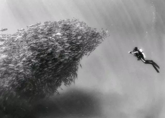 黑白森林背景霸手绘