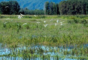定海这个湿地公园即将完工,20多种湿地植物美美哒!
