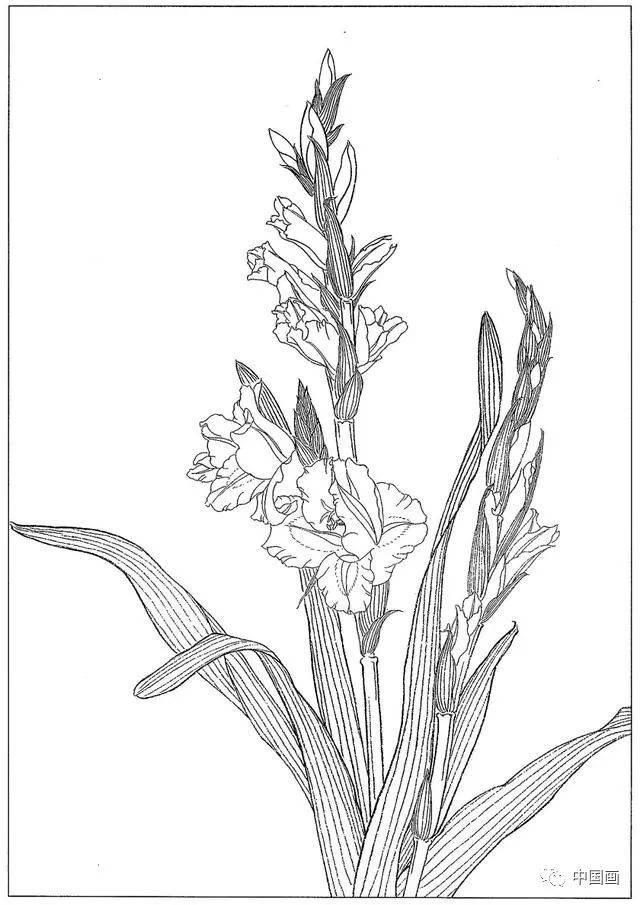 梅兰竹菊四君子国画线描学习素材高清81幅,喜欢就收藏