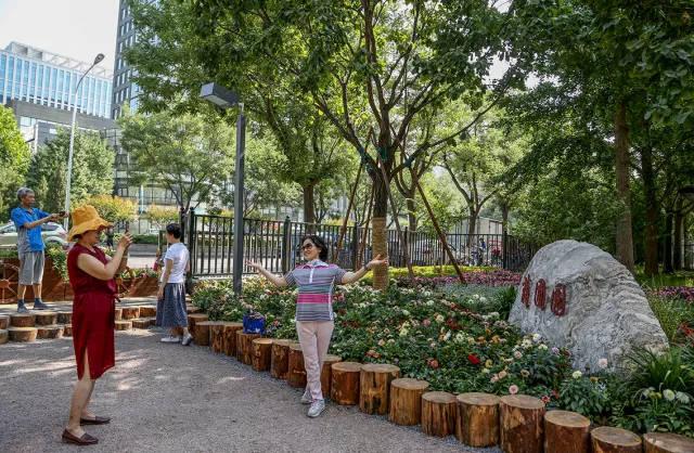 常乐坊城市森林公园 大树环绕引百鸟-社会频道-手机图片